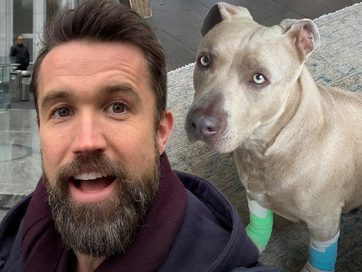 Rob McElhenney & Kaitlin Olson Rescue Dog, Reunite Him with Happy Family