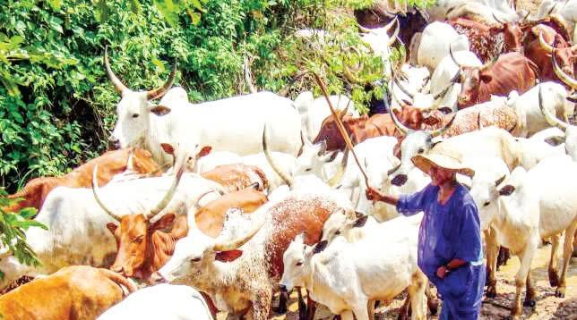 Buhari's Cow Routes Gazette Doesn't Exist, Grazing Ban Stays, Say States