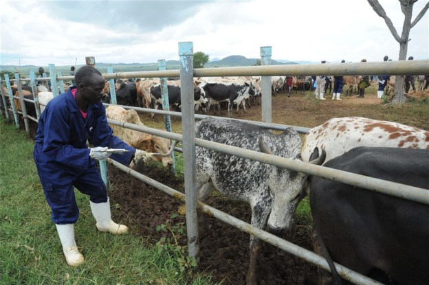 FG Shortlists 21 States For Pilot Grazing Reserves (list)