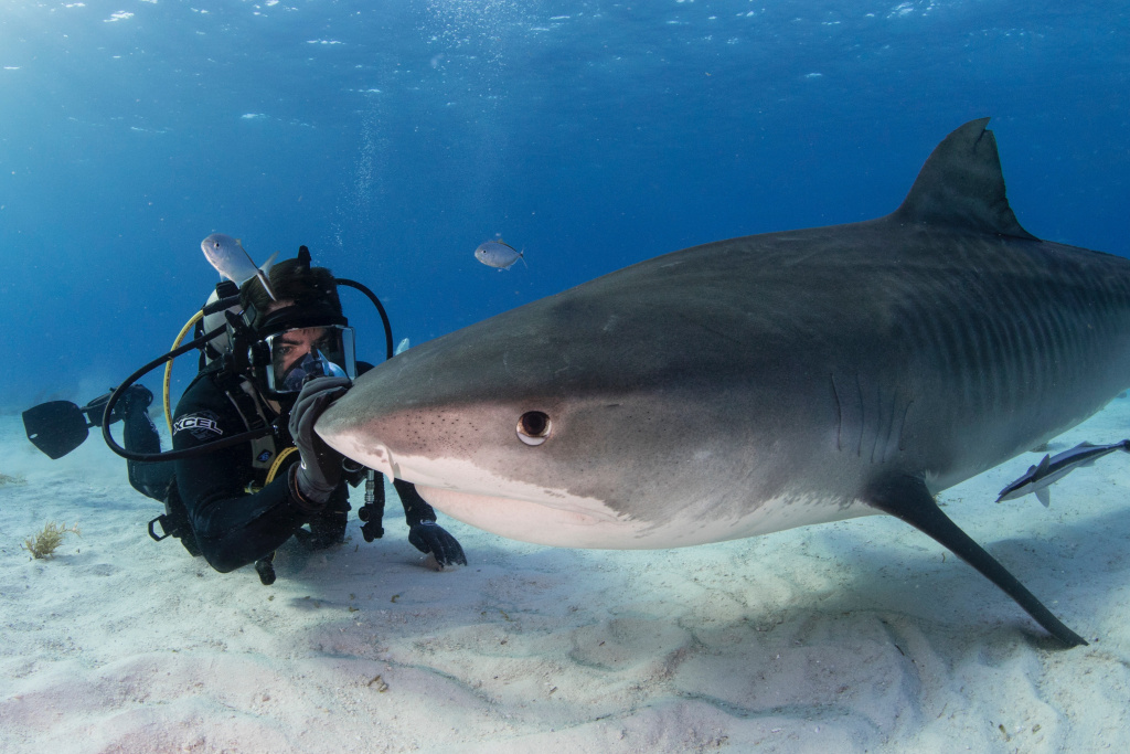 Eli Roth Shark Documentary 'Fin' Sells to Discovery Plus