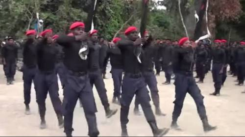 IPOB Fighters Enforce Ban On Open Grazing In Delta, Shoot Cows On Sight