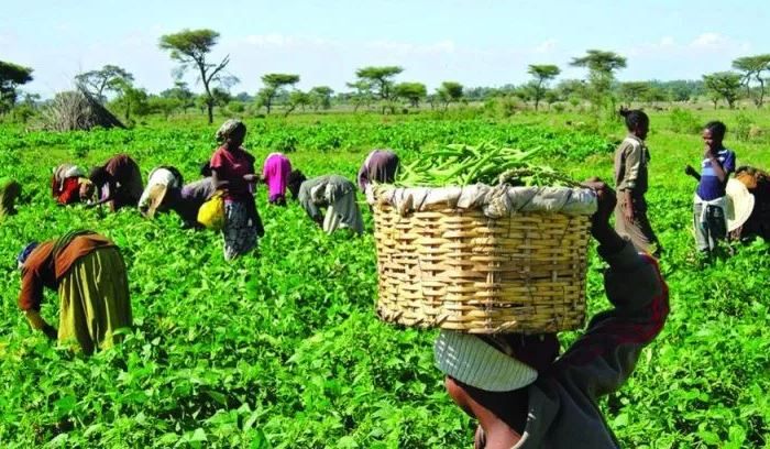 Insecurity May Push Nigeria Back To Food Importation – Farmers Warn