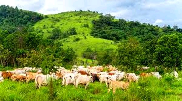 Anti-Open Grazing Law: Herders Want 750,000 Square Metres Of Land In Delta