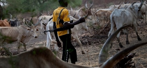 Please Come And Rescue Us From Fulani Herdsmen – Nasarawa Community Begs FG