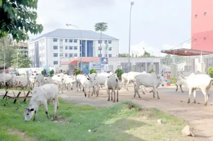 Ogun Assembly Bans Open Grazing, To Attract 3-Year Jail Term