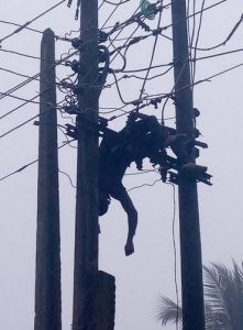 Graphic Photos Of Suspected Vandal Electrocuted While Allegedly Stealing Transformer Cable In Akwa Ibom